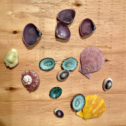 Colorful Seashell Collection