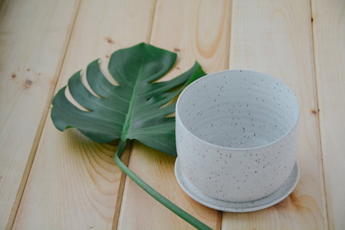 Plant Pot + Saucer - Miller & Co. Wood Studio