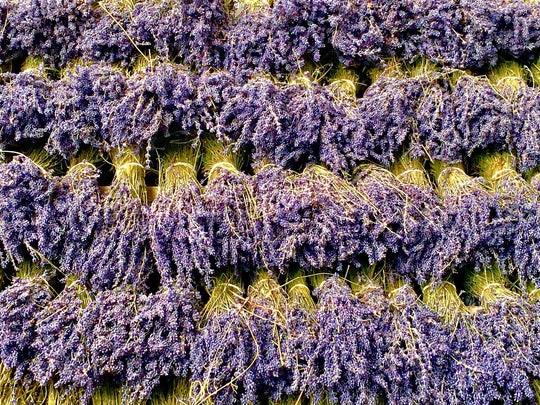 For the Love of Lavender | ACDC Co