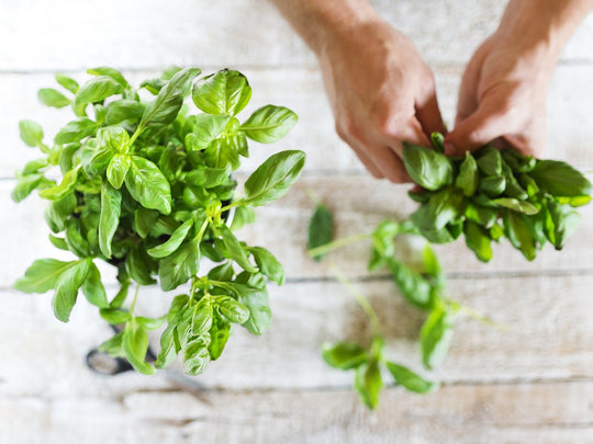 To Pair or Not To Pair... Mint + Basil = Perfection | ACDC Co