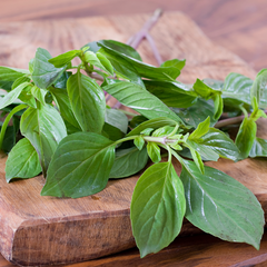 Fresh Basil Leaves used in No 70 Basil Mint Home Fragrance
