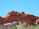 Kissing Camels at Garden of the Gods in CO!