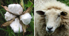 cotton or wool