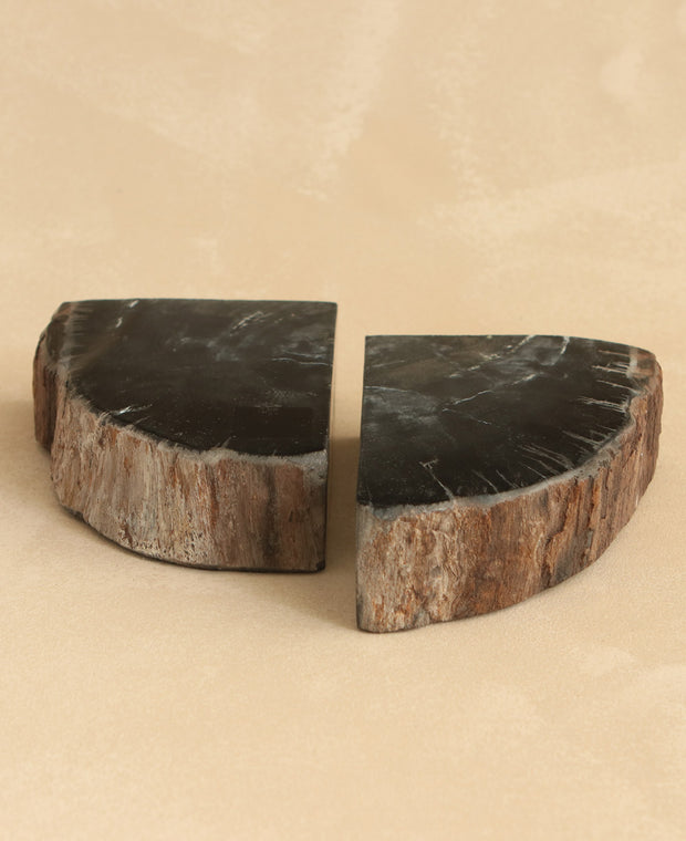 Petrified Wood Bookends