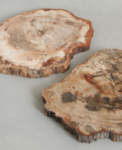 Petrified Wood Trivet