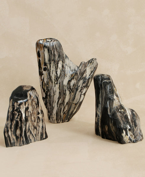 Petrified Wood Statement Accents