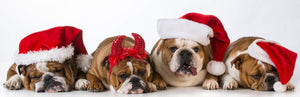 Christmas Shirts 4 Dogs with Christmas Hats - ASC T-Shirts - aussie-shirt-co