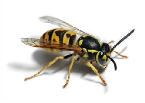 Keep Wasps Away This Summer