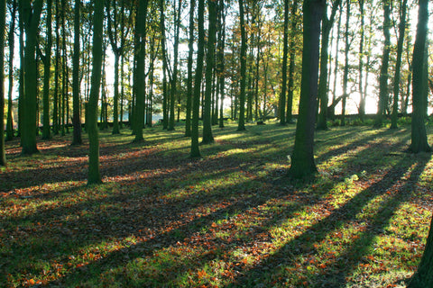 Swithland Woods Leicestershire