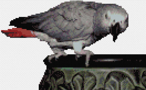 African Grey Parrot Counted Cross Stitch Kit