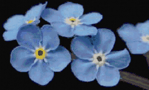 Forget Me Not Flowers Counted Cross Stitch Kit