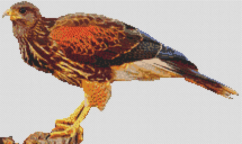 Harris Hawk - Predator Bird Counted Cross Stitch Kit