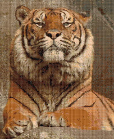 Arrogance - Tiger Counted Cross Stitch Kit