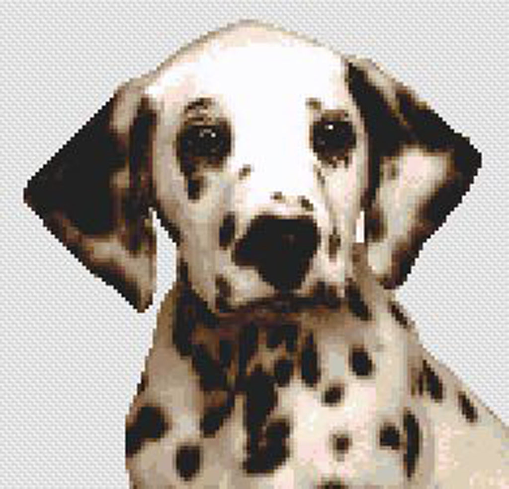 Dalmatian Puppy Counted Cross Stitch Kit
