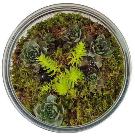 NEW - Terrarium's by Roses for Autism - In-Store Only