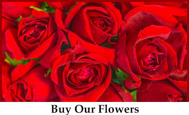 Buy and Order Flowers