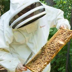 Beekeeper in white jacket and veil examining a frame of bees.