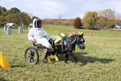 A woman in a full beekeeping suit driving a pony cart, with the bay pony dressed as a honey bee.