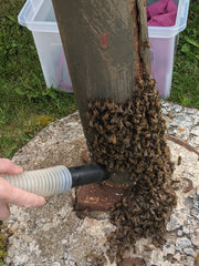 Photo of a hand holding a white hose ending in a dark brown nozzle, gently sucking bees off a lamp post.