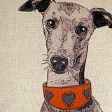 italian greyhound illustration in detail