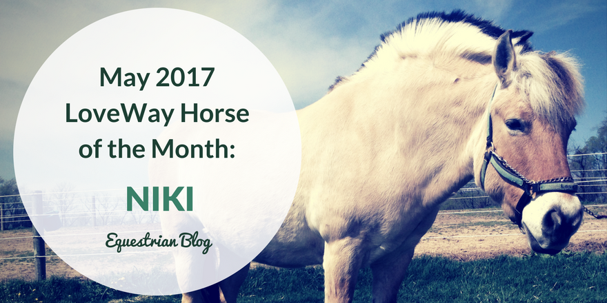 Niki Featured Therapy Horse of the Month