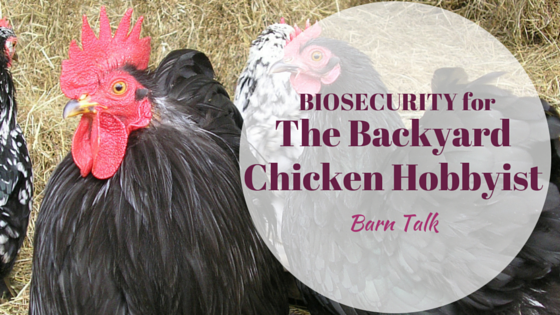 Biosecurity Tips for Backyard Chicken Hobbyists