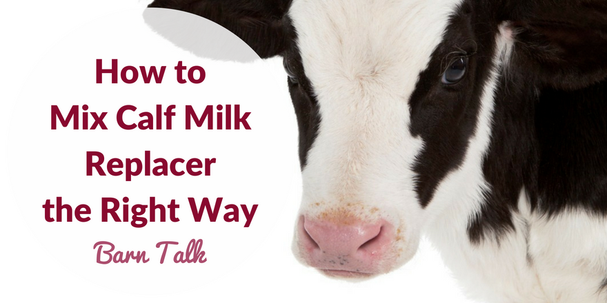 Calf milk replacer benefits