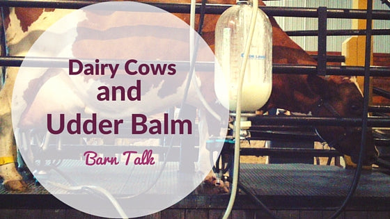 Dairy Cows and Udder Cream