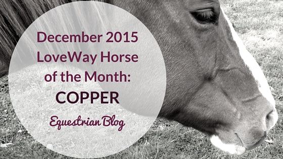 LoveWay Horse of the Month Copper
