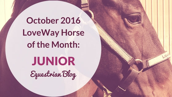 LoveWay Therapy Horse of the Month October 2016
