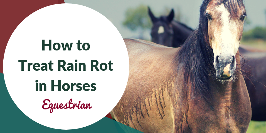 equine rain rot treat and prevent