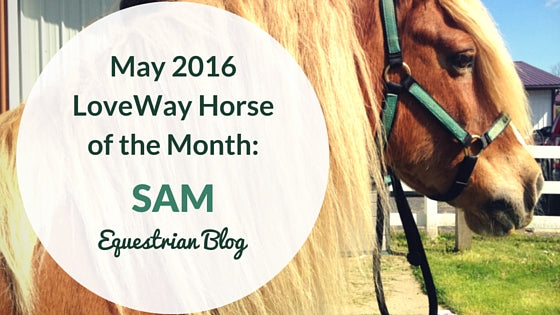 Equine Therapy LoveWay Horse May 2016 Sam