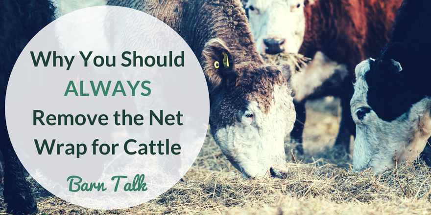 Tips for Feeding Cattle Round Bales