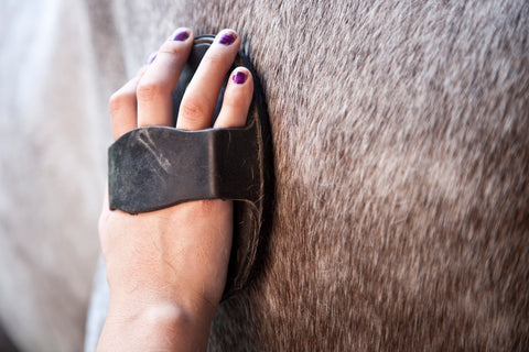 daily horse grooming prevents rain rot