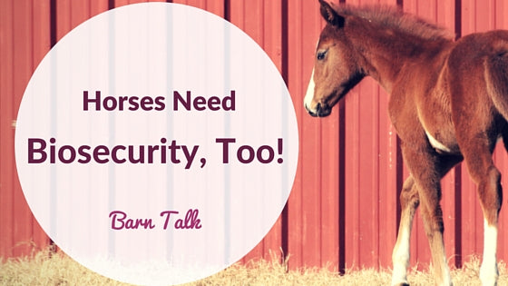 Horses Need Biosecurity, Too!