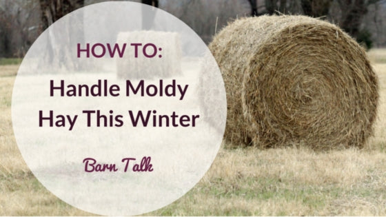 How to Handle Moldy Hay in Winter