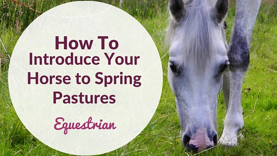 How To Introduce Your Horse to Spring Grazing