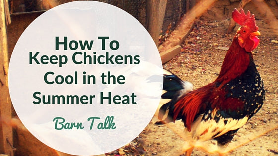 How To Keep Chickens Cool in the Heat of Summer
