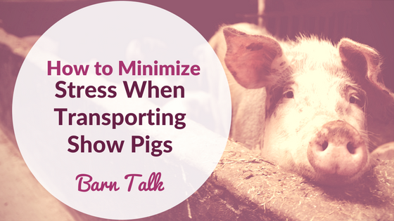 Minimize Stress When Transporting Show Pigs