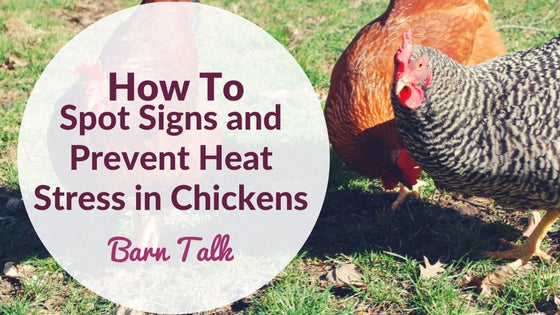 How To Spot Signs And Prevent Heat Stress In Chickens - VPSI