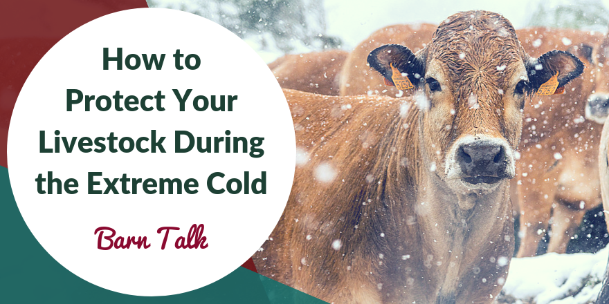 How to care for livestock in extreme cold