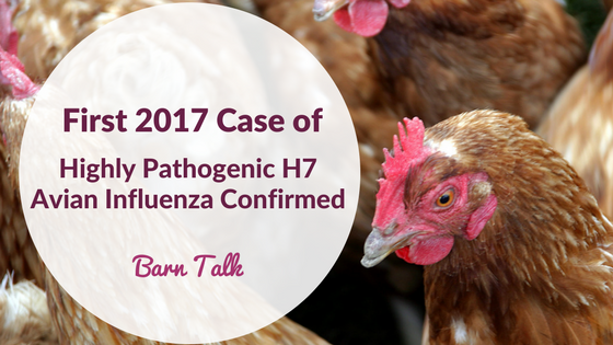 Avian Influenza H7 Outbreak 2017