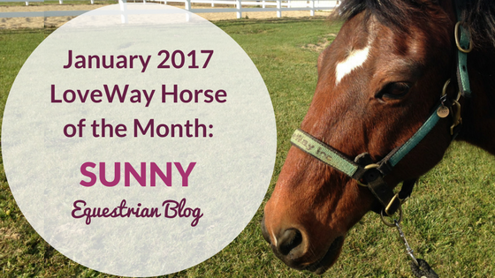 LoveWay Inc Featured January Therapy Horse