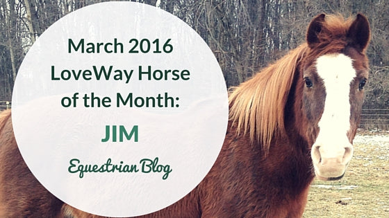 LoveWay Therapy Horse of the Month March 2016