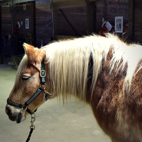 LoveWay Therapy Horse Honey