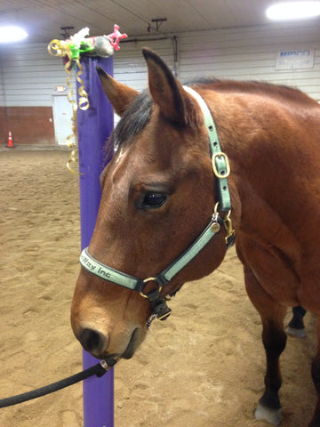 Equine Assisted Therapy Quarter Horse