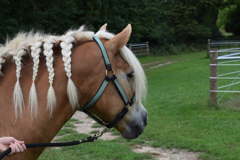 September 2016 Featured Therapy Horse