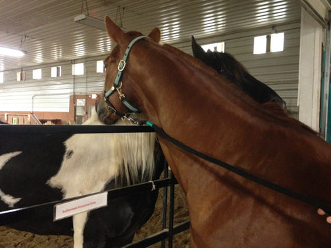 LoveWay Horses Rusty and Charlie