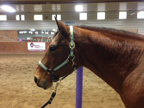 Equine Assisted Therapy Featured Horse Jasper