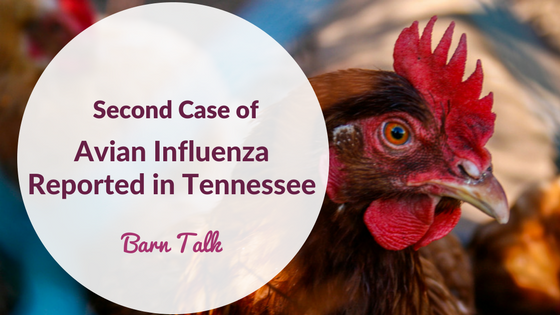 Avian Influenza Case Reported in Tennessee